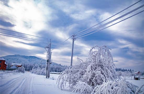 Ice and Snow Covered Utility Lines